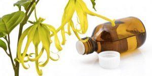 L'huile essentielle d'ylang-ylang pour booster votre libido