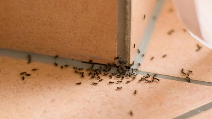 Comment se débarrasser des fourmis, des souris, des mouches et des araignées
