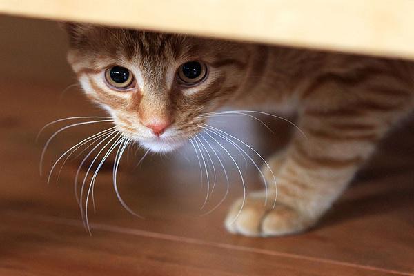 Pourquoi certains chiens et chats sont-ils timides?