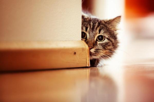Chiens et chats timides: comment aider les animaux timides?