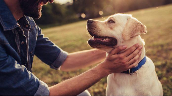 Comment prendre soin de son chien âgé ?