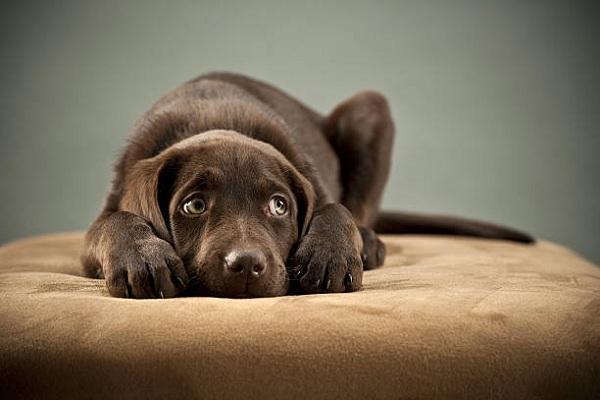 chien timide