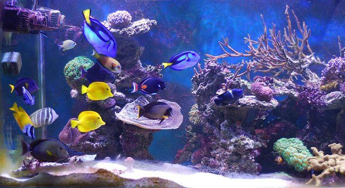 16 types populaires de poissons d'aquarium