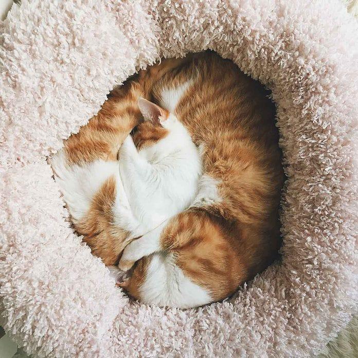 Comment choisir le meilleur lit pour votre chat